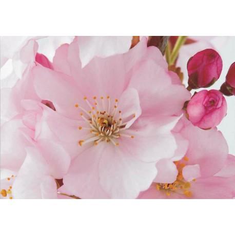 Fotomural flor manzano 8-020 Decoas.