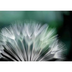 Fotomural flor diente de león 131 Decoas.