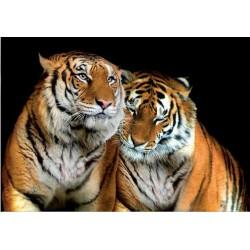 Fotomural tigres 130 Decoas