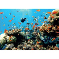 Fotomural 4-005 Coral Decoas