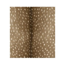 Papel pintado Black Forest 514810